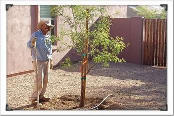 Tree planting, saguaro, palm, cactus, sod, grass seeding.